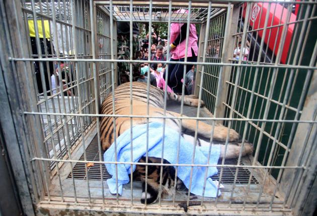 Thailand Tiger Temple