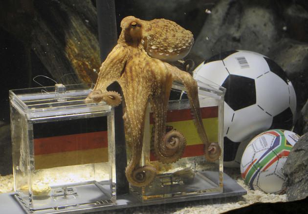 DEU Fussball WM Tiere Orakel