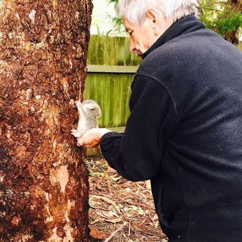 Hawks Nest resident Louise Haynes found this adorable, baby #koala under a eucalyptus tree in her backyard after storms lashed the #NSW coast