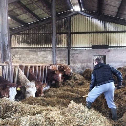 #saturdaymorning #brunch #farmlife #love #farmer #silage #calvingseason #cows #ruralireland #irishfarm #sonofthesoil