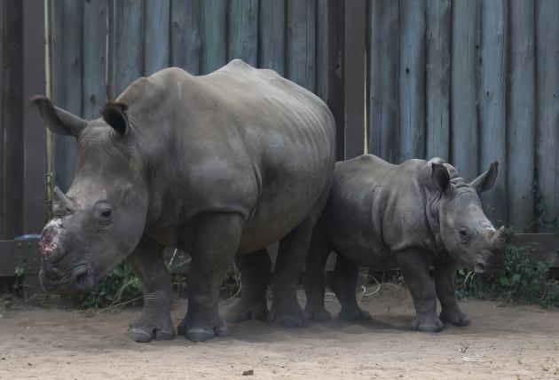 South Africa Rhino Refuge