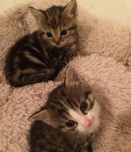 kittenslike3