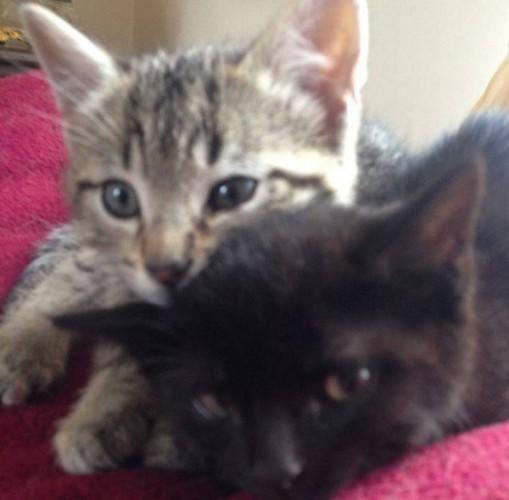 kittenslike4