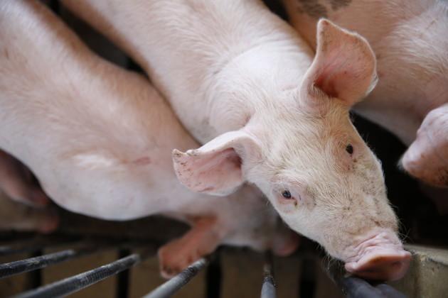America's Pig Farmer of the Year Award Winner