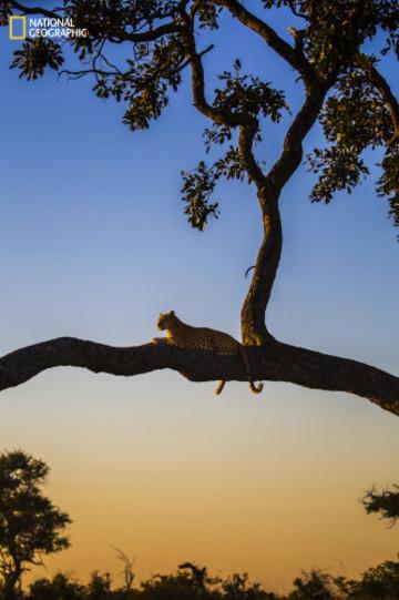 The best spot on the savannah