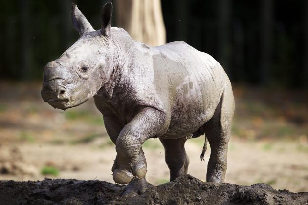 DublinZoo_Rhino07