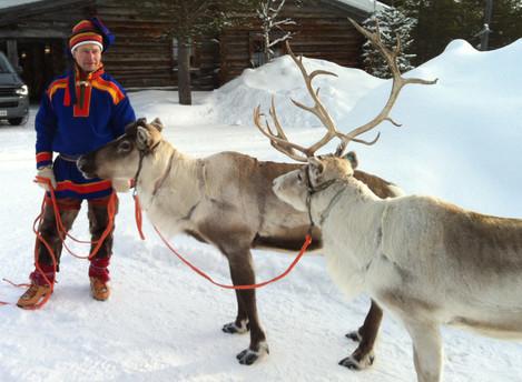 Finland Reindeer Facts
