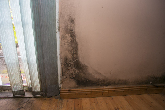walls are covering in black mould throughout the house