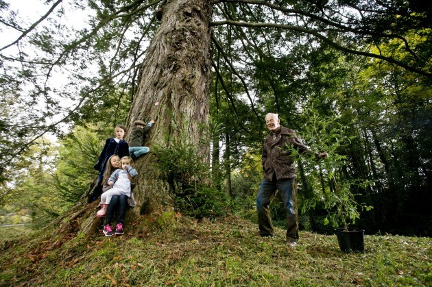 largest forest grove of giant redwoods outside California