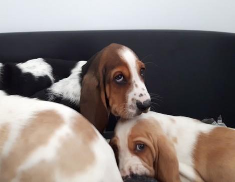 DSPCA Port Puppies Nov 2016