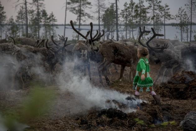 Russia Reducing Reindeer