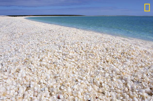 03-shell-beach-shark-bay-western-australia