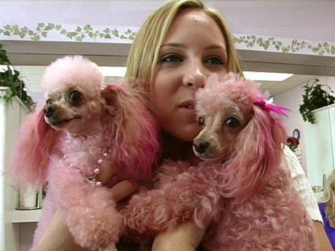 marissa-super-sweet-16-pink-poodles__width_580