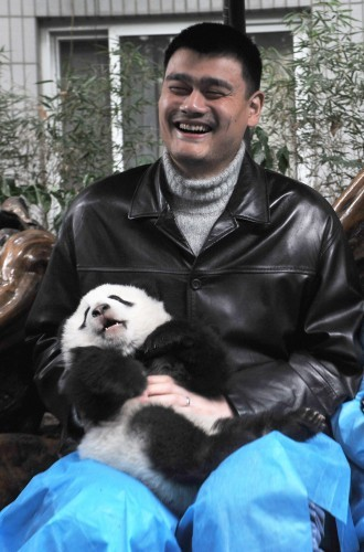 picture of the day china s retired nba star yao ming and a panda