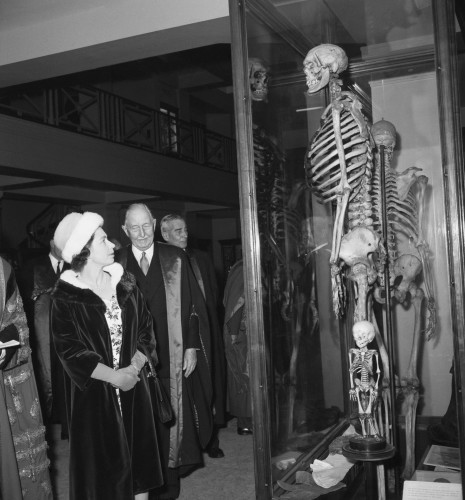 Royalty - The Queen meets the Irish Giant - Hunterian Museum, London