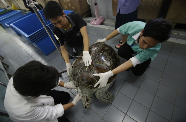 Thailand Turtle Trouble