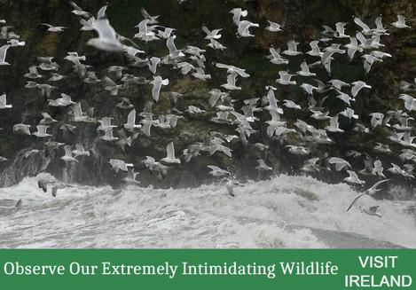 INTIMIDATING WILDLIFE