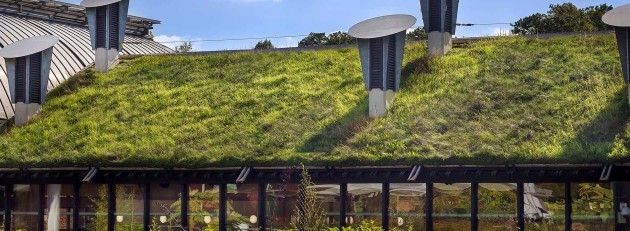 Green Roof on a Public Library Building