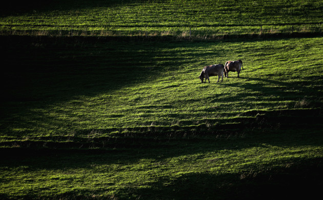 Light and shadow on a Bavarian meadow