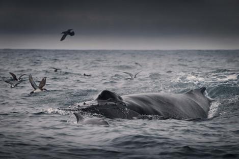 whalessmall