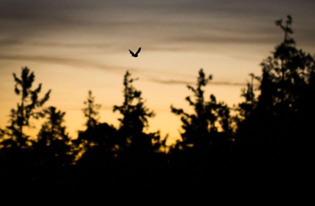 Bat in the Taunus