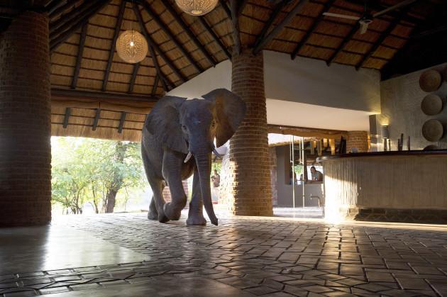 elephant-hotel-zambia_005