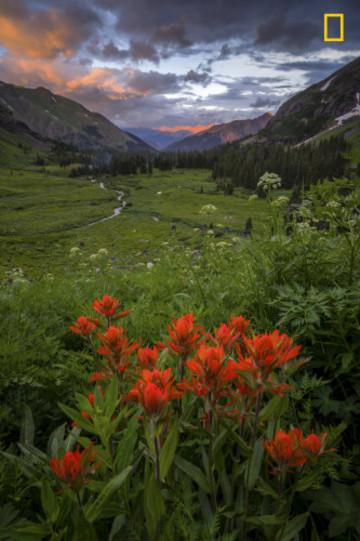 Flowers last light