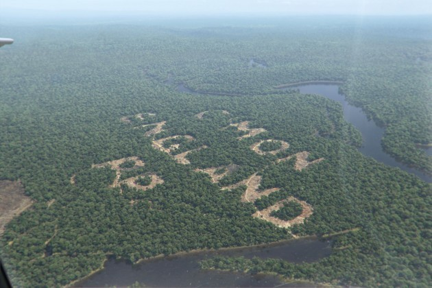 paddy power forest