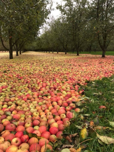 Farmers Journal orchard 2