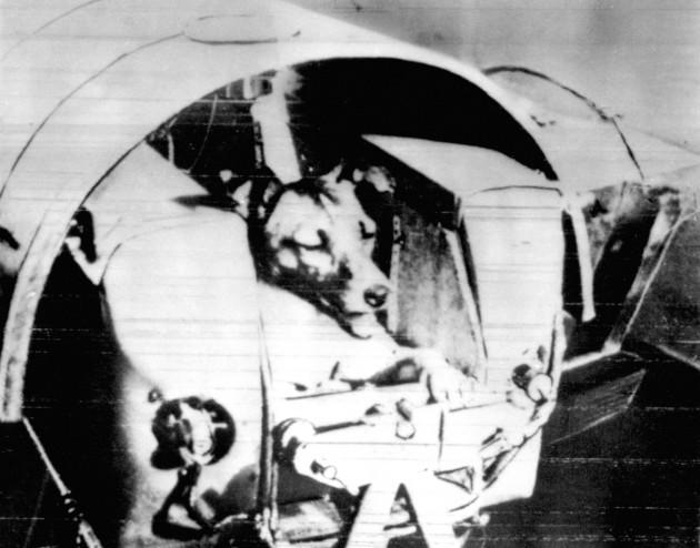 Laika space dog