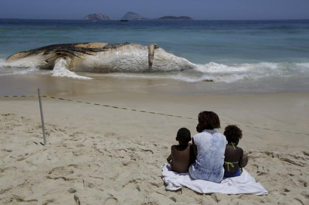 Dead Humpback Whale on the beach of Ipanema.