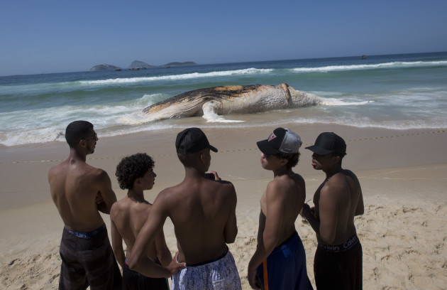 Brazil Beached Whale