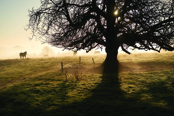 p40  Early morning at Lisdonagh