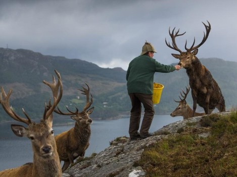 04-best-7-scottish-moors-deer-forest-antlers-estate-stalking.adapt.945.1