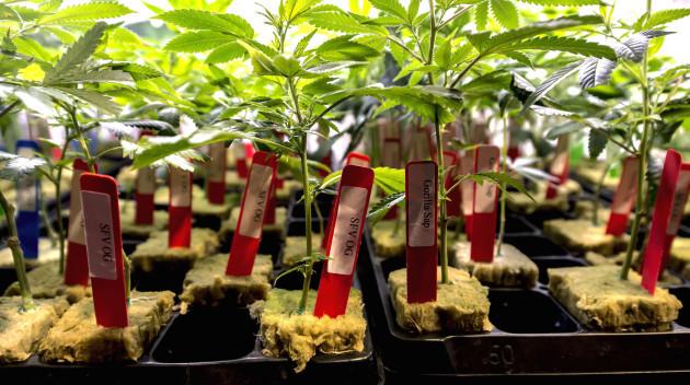 California Readies for Adult Use Marijuana Sales