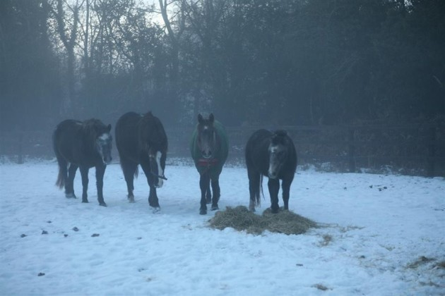 horses_cold_weather