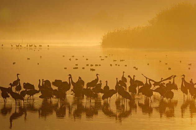 008_cranes-hula-valley-israel