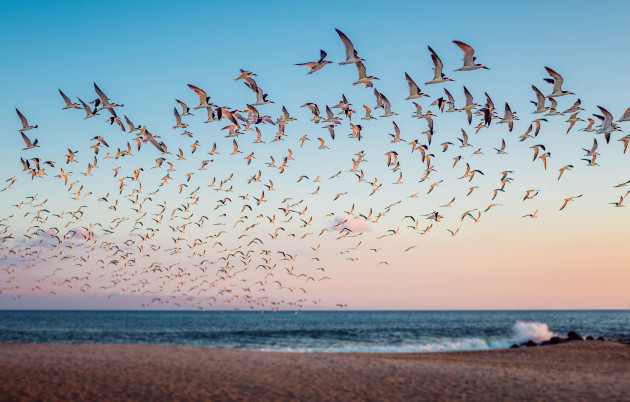 002_bird-flock-cape-may-new-jersey