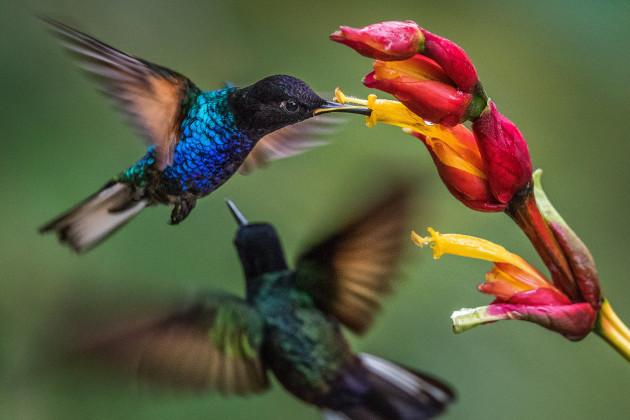 007_hummingbird-mindo-ecuador