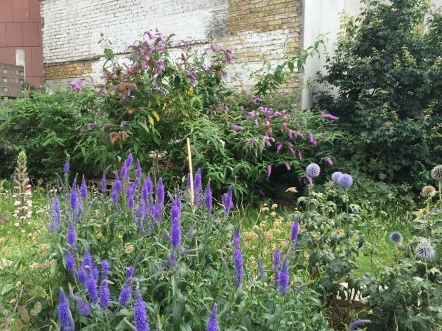 marys-abbey-garden