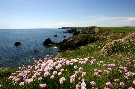Copper Coast with Seapink
