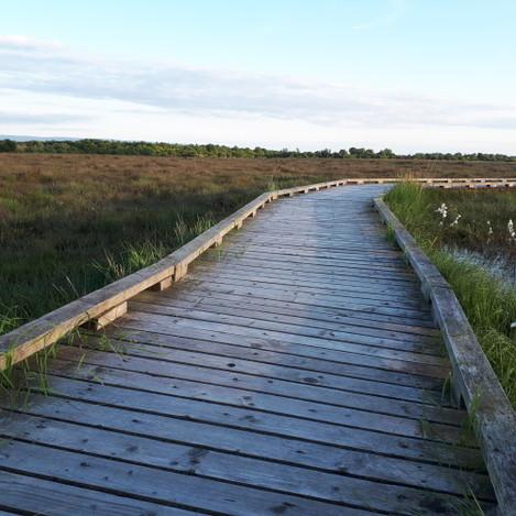 Clara Bog Trackway