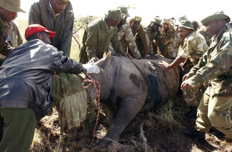 Kenya Rhino Deaths