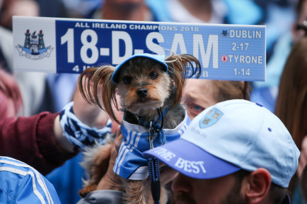Dublin supporter Marley watches on