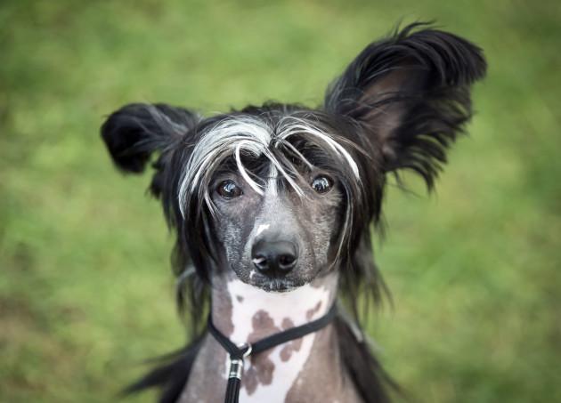 Darlington Dog Society Annual Show
