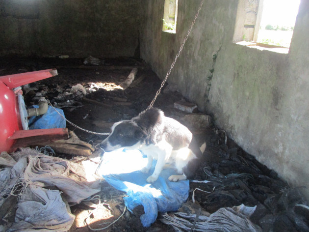 Farmer convicted after 40 dogs found chained and neglected on a