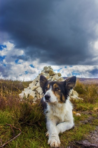 Donnie's Dog at Cairn in May