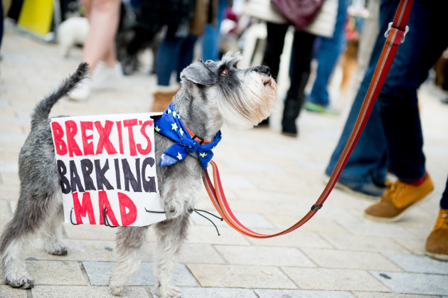 The Wooferendum Anti-Brexit Peoples Vote dog march in London