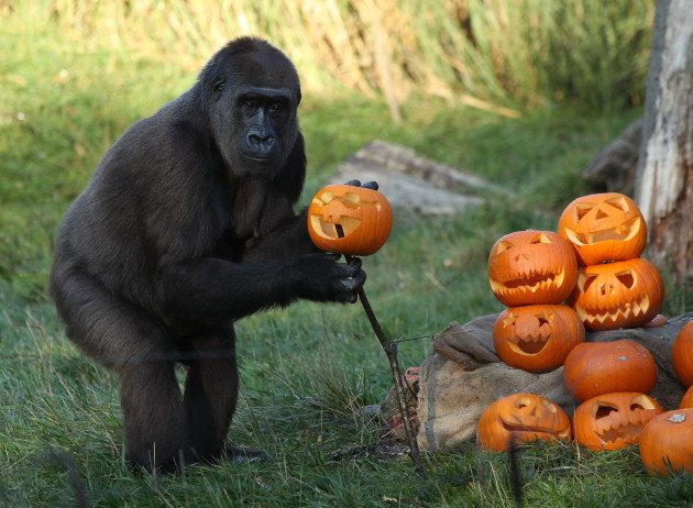 Halloween at London Zoo