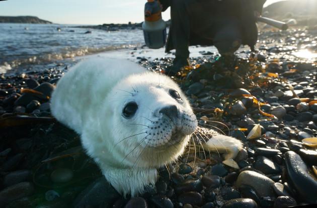 Seal pups on Farne Islands